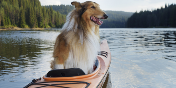How To Modify A Kayak For A Dog?